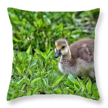 Babe On Safari Throw Pillow by Karol Livote