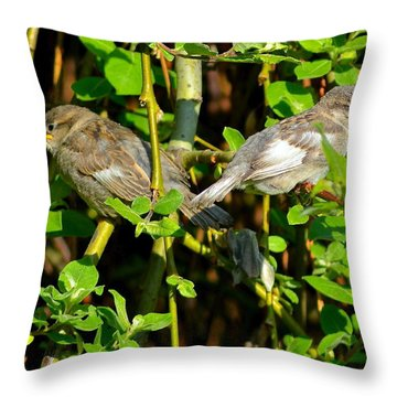 Babies Afraid To Fly Throw Pillow by Frozen in Time Fine Art Photography