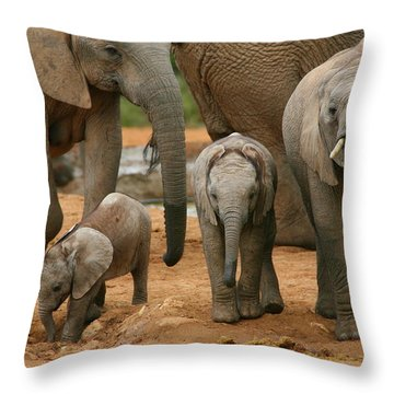 Baby African Elephants Throw Pillow by Bruce J Robinson