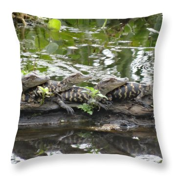 Baby Alligators Throw Pillow by Dan Sproul