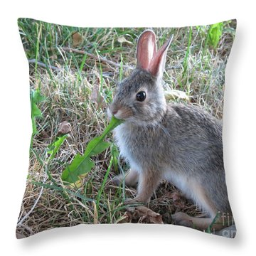 Baby Bunny Eating Dandelion #01 Throw Pillow by Ausra Huntington nee Paulauskaite