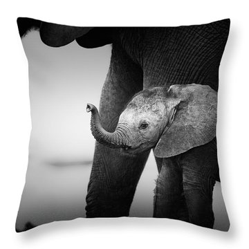 Baby Elephant Next To Cow  Throw Pillow by Johan Swanepoel