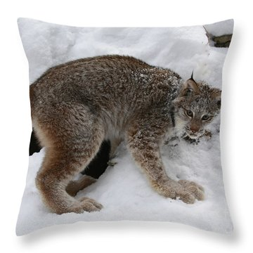 Baby Lynx Staying Close To Its Winter Den Throw Pillow by Inspired Nature Photography Fine Art Photography
