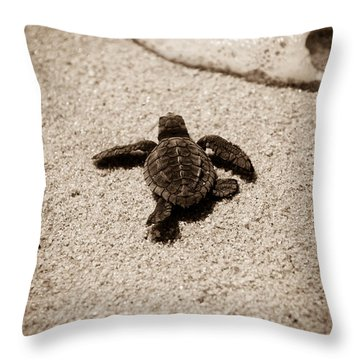 Baby Sea Turtle Throw Pillow by Sebastian Musial