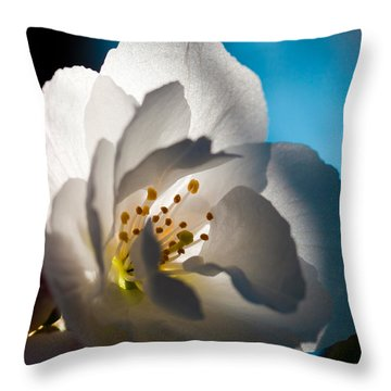 Backlit Cherry Blossom Throw Pillow by David Patterson