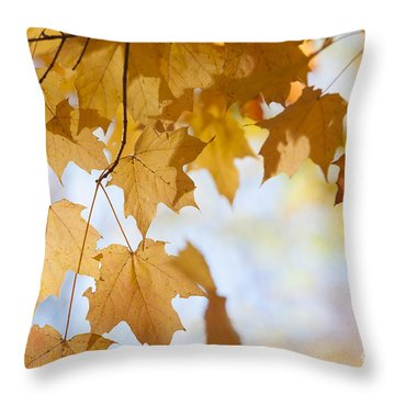 Backlit Maple Leaves In Fall Throw Pillow by Elena Elisseeva