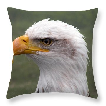 Bald Eagle Portrait Throw Pillow by Brian Chase