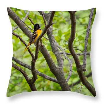 Baltimore Oriole Throw Pillow by Bill Wakeley