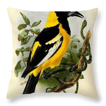Baltimore Oriole Throw Pillow by J G Keulemans