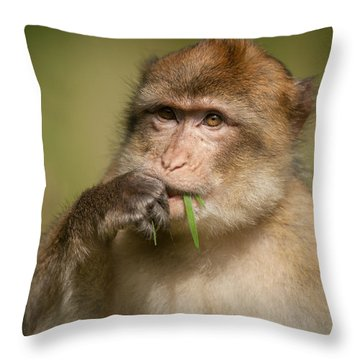 Barbary Macaque Throw Pillow by Andy Astbury