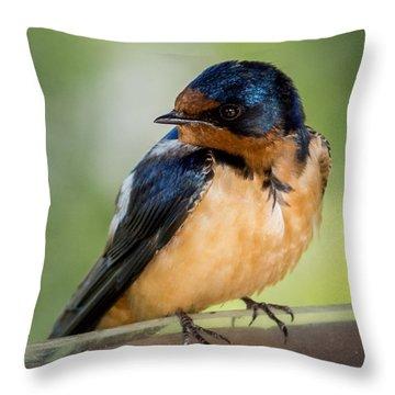 Barn Swallow Throw Pillow by Ernie Echols