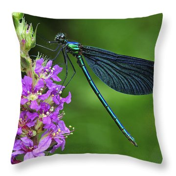 Beautiful Demoiselle Male Switzerland Throw Pillow by Thomas Marent