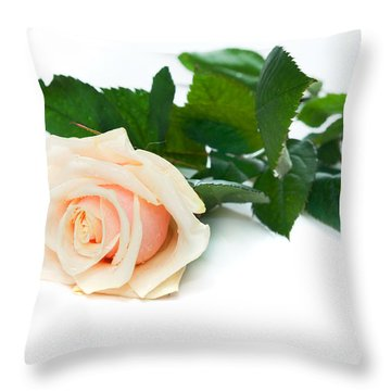 Beautiful Rose On White Throw Pillow by Michal Bednarek