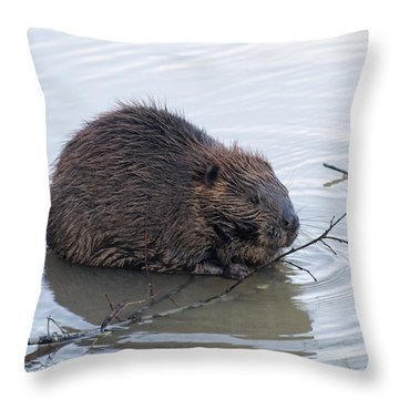 Beaver Chewing On Twig Throw Pillow by Chris Flees