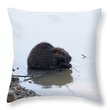 Beaver In The Shallows Throw Pillow by Chris Flees