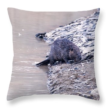 Beaver On Dry Land Throw Pillow by Chris Flees