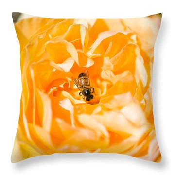 Bee Pollinating A Yellow Rose, Beverly Throw Pillow by Panoramic Images