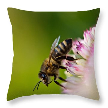 Bee Sitting On A Flower Throw Pillow by John Wadleigh