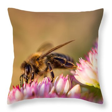 Bee Sitting On Flower Throw Pillow by John Wadleigh