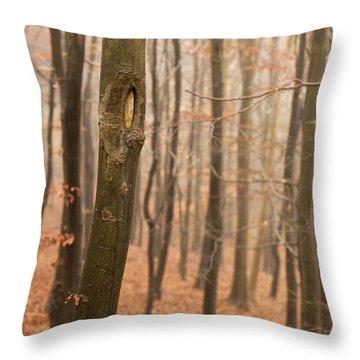 Beech Wood In Autumn Throw Pillow by Anne Gilbert