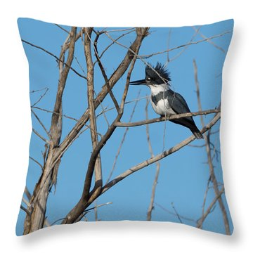 Belted Kingfisher 4 Throw Pillow by Ernie Echols