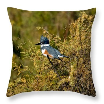 Belted Kingfisher Female Throw Pillow by Anthony Mercieca