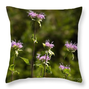 Bergamot Throw Pillow by Steven Ralser