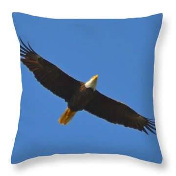 Best Soaring Bald Eagle Throw Pillow by Jeff at JSJ Photography