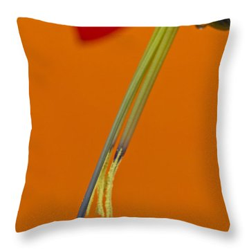 Bilbergia  Windii Detail Throw Pillow by Heiko Koehrer-Wagner