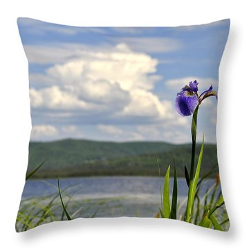 Birch Lake Iris Throw Pillow by Cathy Mahnke
