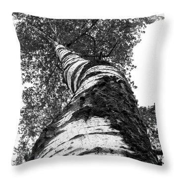 Birch Tree Throw Pillow by Tim Buisman