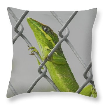 Bite Me Throw Pillow by Chrisann Ellis