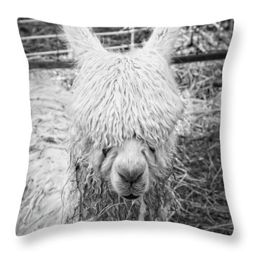 Black And White Alpaca Photograph Throw Pillow by Keith Webber Jr