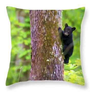 Black Bear Cub In Tree Throw Pillow by Dan Friend