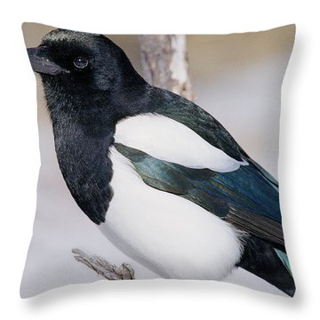 Black-billed Magpie Throw Pillow by Eric Glaser