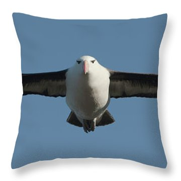 Black-browed Albatross Thalassarche Throw Pillow by Panoramic Images