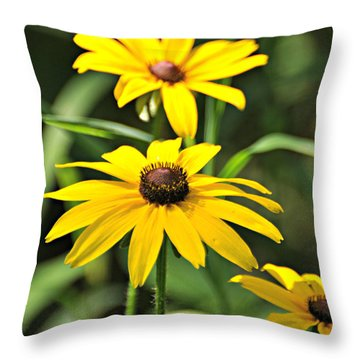 Black Eyed Susan Throw Pillow by Marty Koch