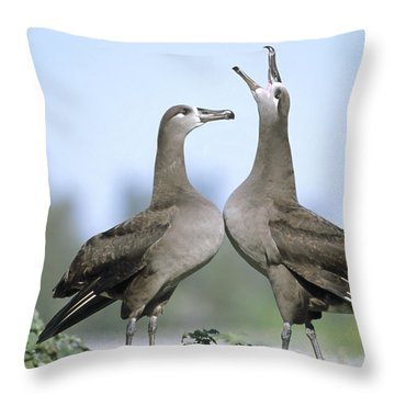 Black-footed Albatross Courtship Dance Throw Pillow by Tui De Roy
