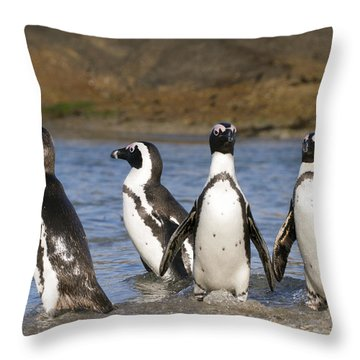 Black-footed Penguins On Beach Cape Throw Pillow by Alexander Koenders
