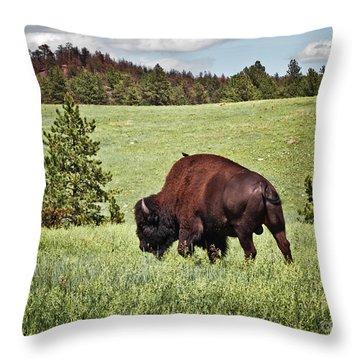 Black Hills Bull Bison Throw Pillow by Robert Frederick