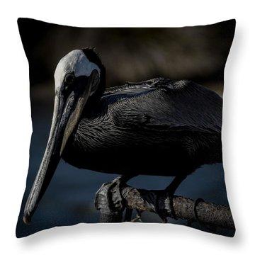 Black Pelican Throw Pillow by Ernie Echols