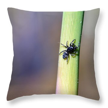 Black Spider In Reeds Throw Pillow by Toppart Sweden