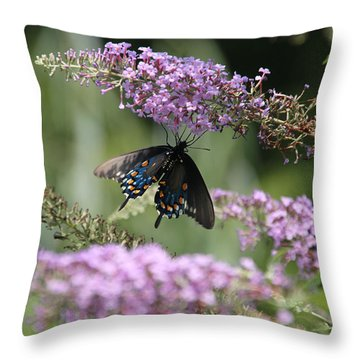 Black Swallowtail1-featured In Newbies-nature Wildlife- Digital Veil-comfortable Art Groups Groups Throw Pillow by EricaMaxine  Price