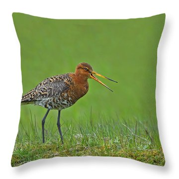 Black-tailed Godwit Throw Pillow by Tony Beck