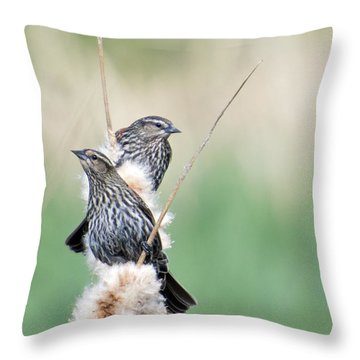 Blackbird Pair Throw Pillow by Mike  Dawson