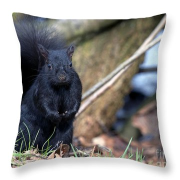 Blackie Throw Pillow by Sharon Talson