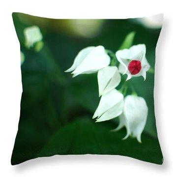 Bleeding Heart Vine Blossom Throw Pillow by Floyd Menezes
