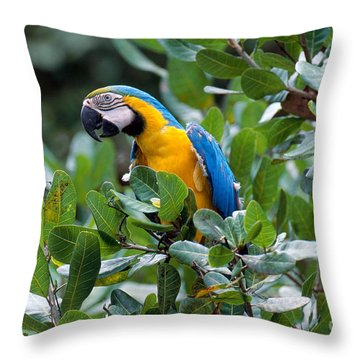 Blue And Yellow Macaw Throw Pillow by Art Wolfe
