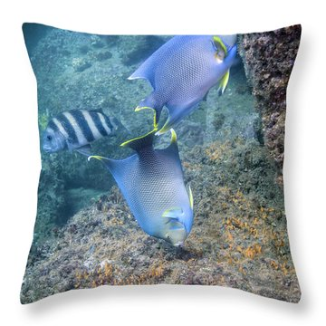 Blue Angelfish Feeding On Coral Throw Pillow by Michael Wood