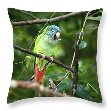 Blue Crowned Parakeet Throw Pillow by James Brunker